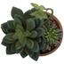 Succulent In Chevron Pot