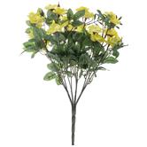 Yellow Mini Rose Bush