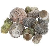 Green Turbo Shells