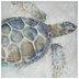Sea Turtle Canvas Wall Decor