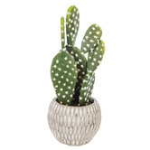 Prickly Pear Cactus in Gray Cement Pot