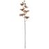 Beige Phalaenopsis Orchid Stem