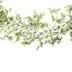 Green Mini Ficus Garland