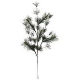 Pine Leaves Stem