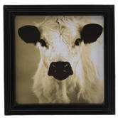 Miniature Cow Framed Art