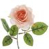 Coral Rose Pick