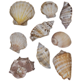Sea Shell Stickers
