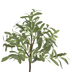 Potted Olive Tree - Large