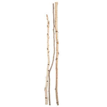 Birch Sticks