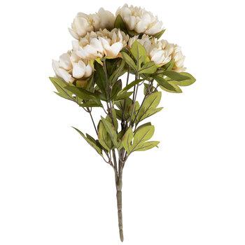 Cream Peony Bush