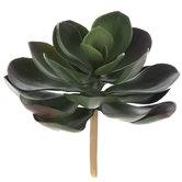 Echeveria Succulent Pick