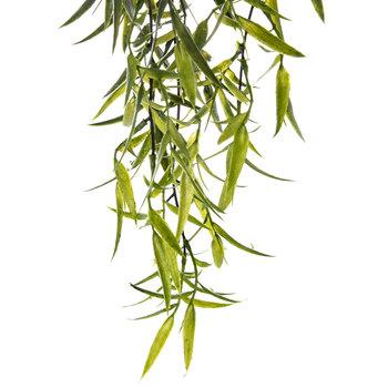 Bamboo Leaf Hanging Bush