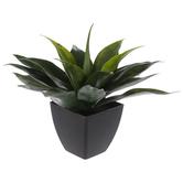Agave In Black Squared Pot
