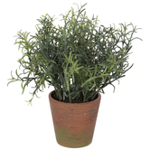 Rosemary In Orange Pot