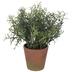 Rosemary In Orange Pot