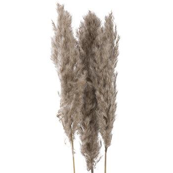 Brown Pampas Grass