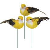 Yellow Feather Birds