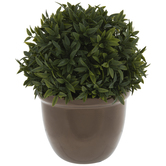 Boxwood In Metallic Pot