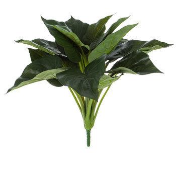 Green Caladium Bush