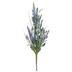 Blue Lavender Bush With Berries