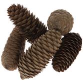 Spruce Pinecones