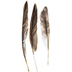 Gray Duck Wing Quills