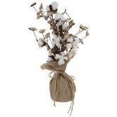 Cotton Tree In Burlap Sack