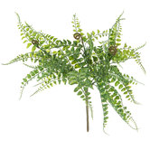 Green Fern Bush