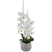 White True Touch Orchid In Silver Pot