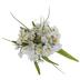 White Blossom Bush