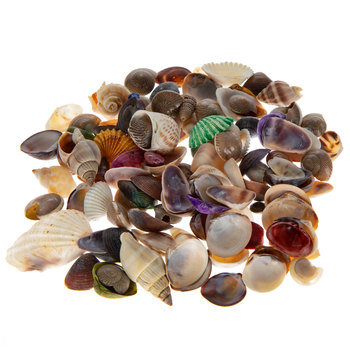 Dyed & Natural Shells