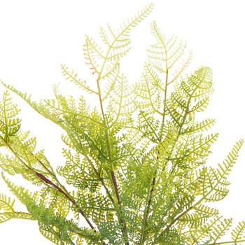 Green Fern Bush