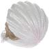 Sleeping Baby Mermaid In White Seashell