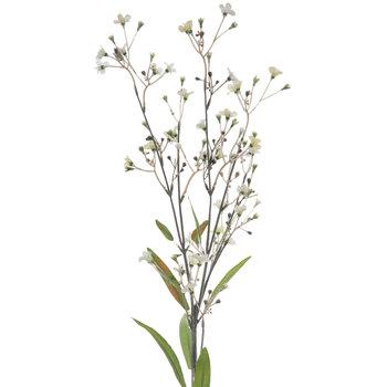 Gypsophila Stem
