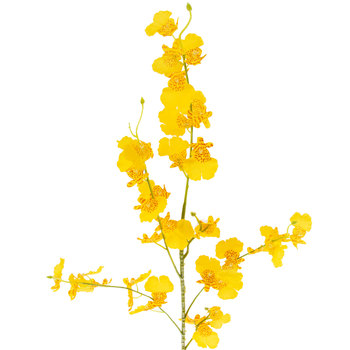 Yellow Dancing Orchid Spray