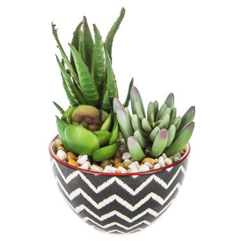 Succulents In Chevron Pot
