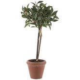 Bay Leaf Topiary In Pot