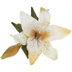 Cream Casablanca Lily Spray
