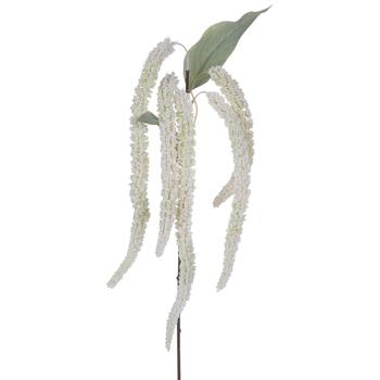 Amaranthus Stem