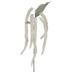Cream Amaranthus Stem
