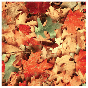 "Real Leaves Scrapbook Paper - 12"" x 12"""