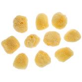 Natural Fine Sponges