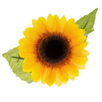 Yellow Sunflower Stem