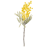 Yellow Vachellia Pick
