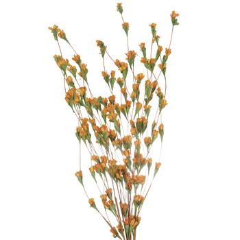 Wildflower Bud Bush
