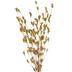 Orange Wildflower Bud Bush