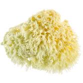 Coarse Sponge