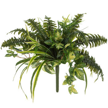 Mixed Spider Plant & Boston Fern Bush