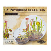 Carnivorous Collection Glass Terrarium Kit
