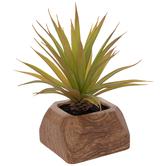 Succulent In Cube Wood Pot